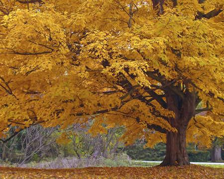 Fall Tree Stok Fotoğraf