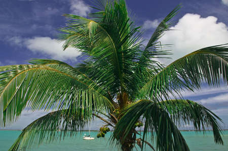 Paradise Palm Tree Stok Fotoğraf