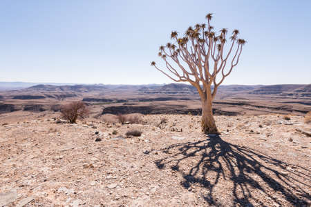 Quiver Tree Shadow looking over arid landscape, Namibia