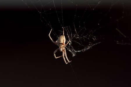 spider on its web Reklamní fotografie