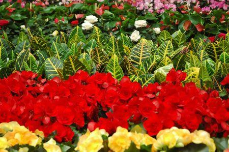 Gardening center photo
