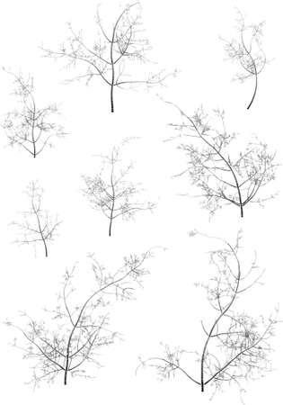 Some winter tree s Stock Vector - 15477621