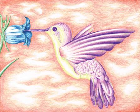 bobby: Hummingbird Color Pencil Illustration by Bobby Rembert