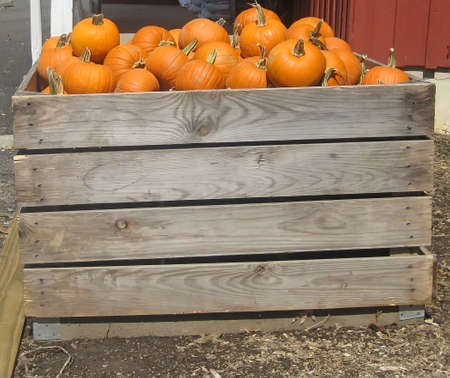 Crate of pumpkins on a farm.