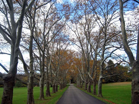 treelined: Grand Tree-Lined Driveway in the Mid-Autumn