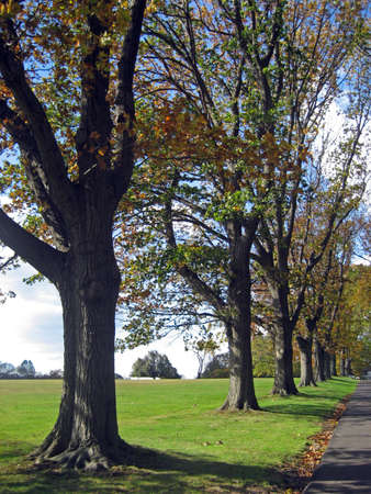 Line of Trees Along a Long Driveway Stock Photo - 592614