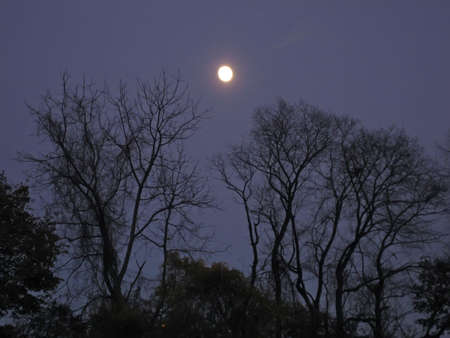 Bright full moon as seen through bare tree branches.