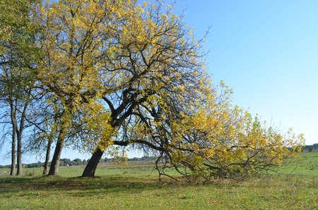 desertion: autumn tree