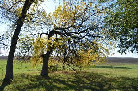 scamper: autumn tree
