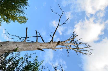 leavings: dried up tree