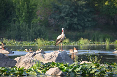 leavings: stork Stock Photo