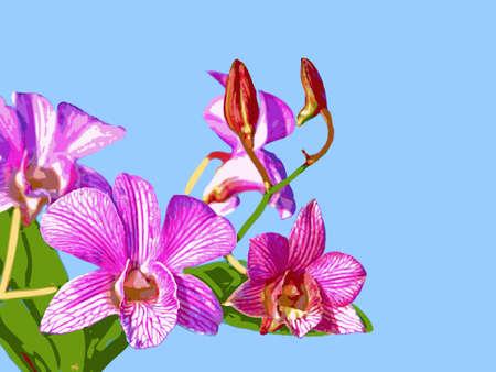 Orchid: Ortgies Cattleyopsis Illustration