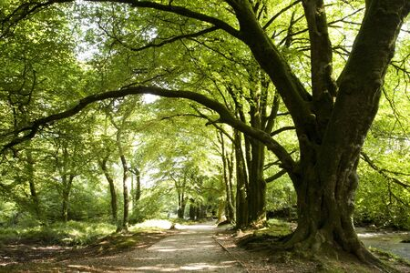 forest path: tree branch arch over path in woods Stock Photo
