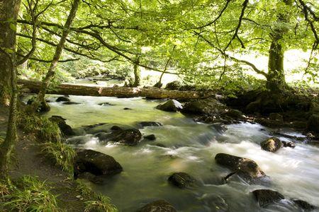 bridging: fallen tree trunk bridging a forest river waterfall Stock Photo