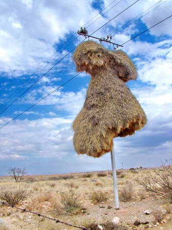 Nest of sociable weaver birds on a telephone pole in the Kalahari Desert, South Africa Standard-Bild - 124862055