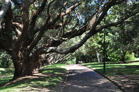 Auckland, New Zealand - December 5, 2016:  Landscape at the Auckland Domain Winter Gardens, North Island, New Zealand.