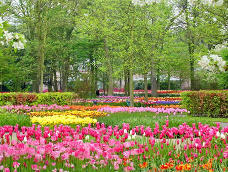 Spring Flowers blooming in a Park 스톡 콘텐츠