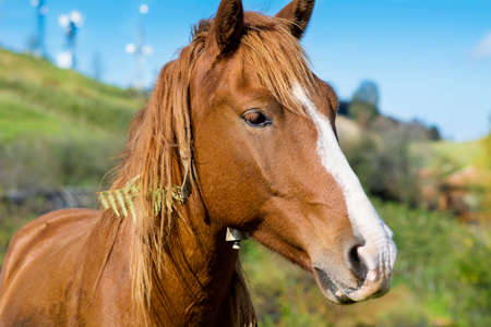 red horse: Portrait of red horse in the mountain Stock Photo