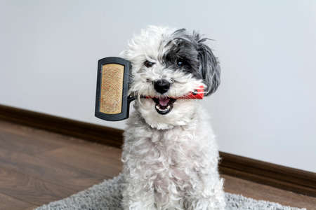 cute dog with comb in the mouth Banco de Imagens