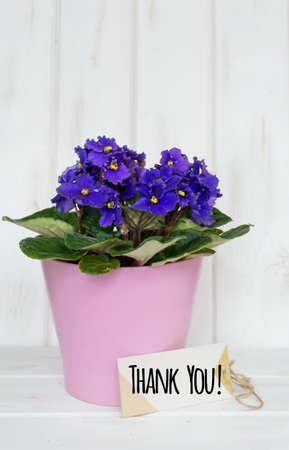 violets in pink pot with thank you message note