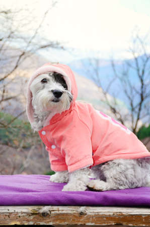 little white dog wrapped in a blanket resting on a mountain top