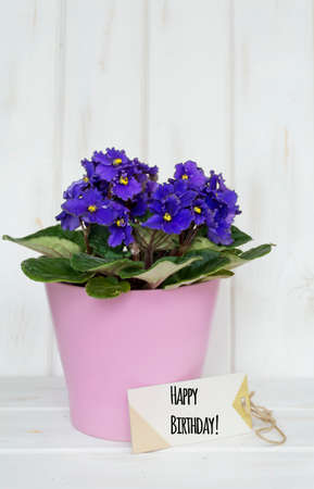 pot violet flowers for birthday gift with happy birthday message card