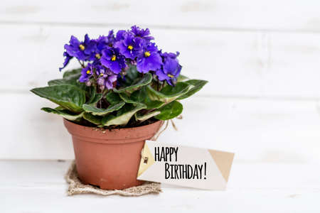 Pot Violet Flowers For Birthday Gift With Message Card Stock Photo