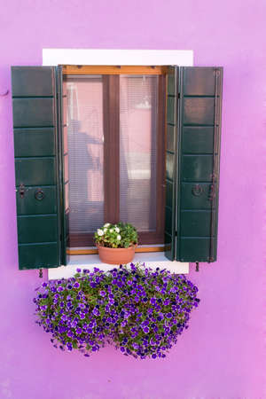 blooming petunia flowers  on a window with green shutters and pink wall Banco de Imagens