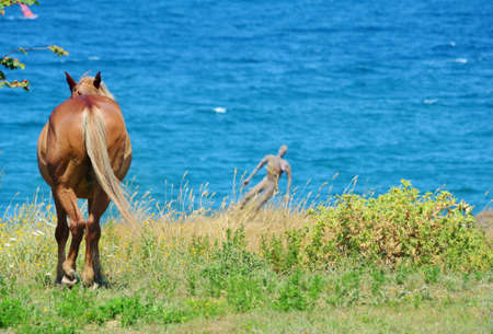 Brown Horses on a Green Meadow above the Sea