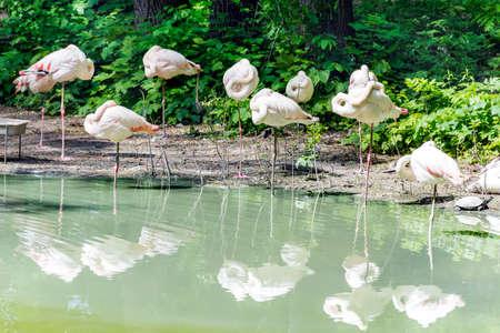 White  Flamingo on the Beach