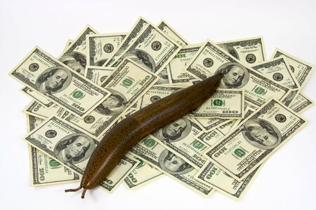 Wood carving of a slug on a pile of cash money representing a sluggish market or economy 版權商用圖片