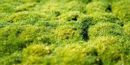 フラット間近短い被写し界深度で活気に満ちた緑の苔 写真素材 - 4458166