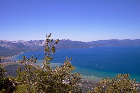Pine trees and biushes with a back drop of a blue sky and lake tahoe