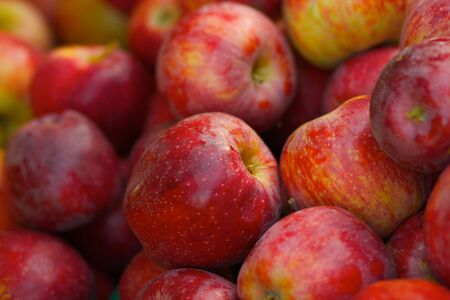 A pile of red braeburn apples at the farmers market photo