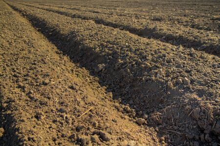 A farm with Freshly furoughed soil with the rows as a perspective to a point as an HDR image Stock Photo - 5921027