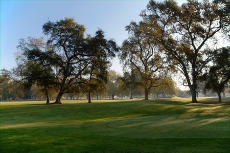 Early Morning Golf Course Greens with backlit trees photo