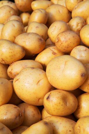 柔らかい背景に焦点を当てて農民市場フロント ユーコンゴールド ジャガイモの山