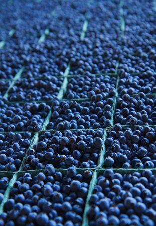 dozens: Large table full of dozens of blueberry baskets trailing to soft focus background