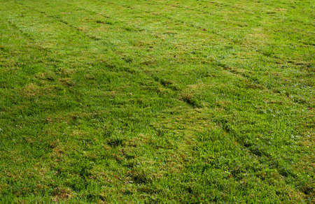 groundskeeper: Freshly mowed green grass leaving a transverst pattern Stock Photo