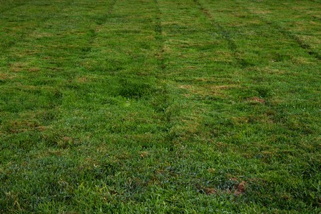 groundskeeper: Freshly mowed green grass leaving a vertical pattern