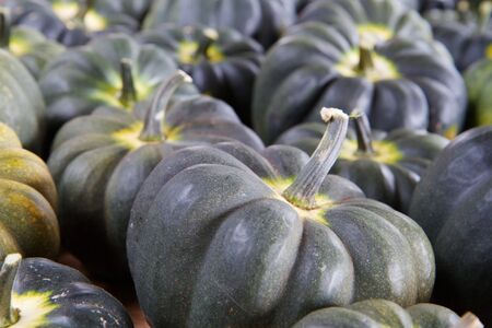 Blue Green Squash with soft focus backround photo