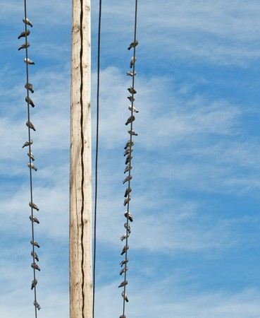 Line of pigeons sitting on the power lines of a wood pole with a blue sky background Stock Photo - 8162726