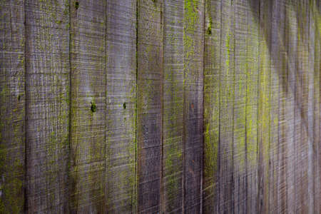 Weathered redwood fence in sun and shade with green moss photo