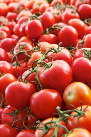 Piles of green vine ripe red tomatoes at the market Stock Photo