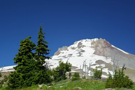 The last set of pine trees before the barren glacier topped Mount Hood photo