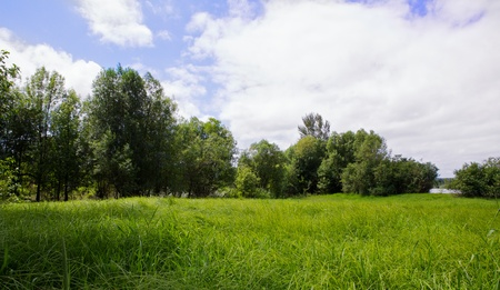 meadow: Green grass and trees of a river marsh against a cloudy blue sky Stock Photo