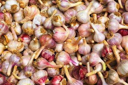 Pile of garlic at the farmers market Stock Photo - 15298943