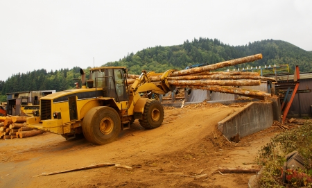lumber mill: Forest Logging Forklift or mover working loading trees into saw at a lumber mill