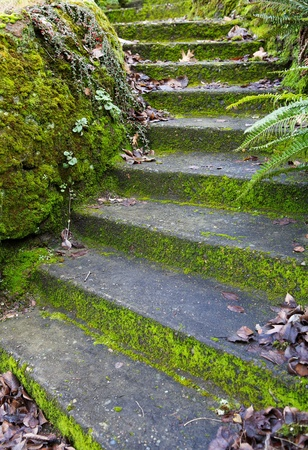 Old moss and leaves covered Curved Concrete Steps up a small home hill