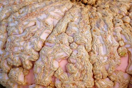 Close up of the warty skin of a pink and tan Peanut Pumpkin
